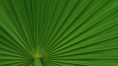 Photograph - Saw Palmetto Fan Delray Beach Florida by Lawrence S Richardson Jr