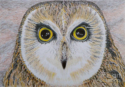 Drawing - Saw Whet Owl by Yvonne Johnstone
