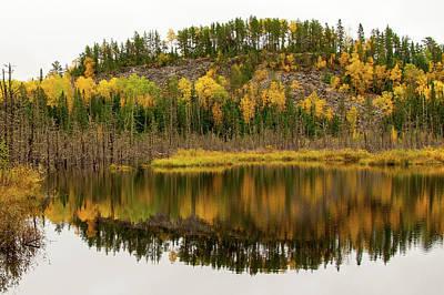 Photograph - Sawbill Swamp by Steve Stuller