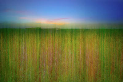 Photograph - Sawgrass Abstract by Mark Andrew Thomas