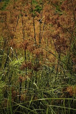 Photograph - Sawgrass by Nadalyn Larsen