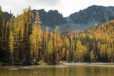 Sawtooth Larches II Art Print