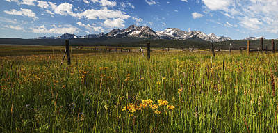 Photograph - Sawtooth Wildflower Bloom In Stanley Idaho by Vishwanath Bhat