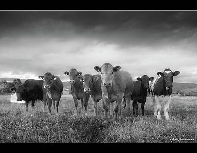 Say Cheese!! Print by Paul Witterick Photography