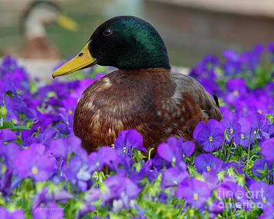 Say Quack Art Print