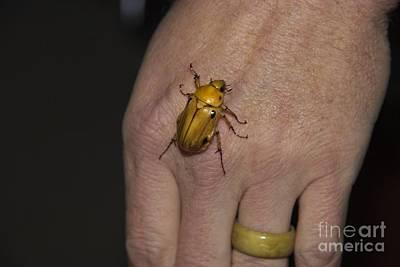Scarab Beetle In Ecuador Art Print by Al Bourassa