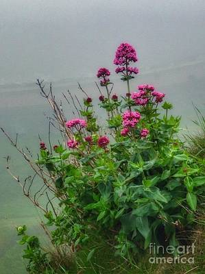 Photograph - Scarborough In The Mist by Joan-Violet Stretch