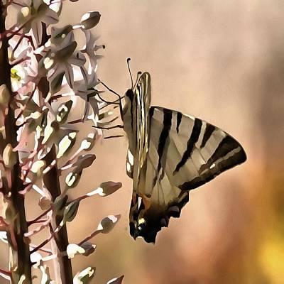 Painting - Scarce Swallowtail Feeding by Tracey Harrington-Simpson
