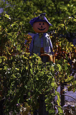 Grape Leaves Photograph - Scarecrow In The Vineyards by Garry Gay