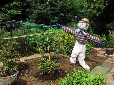 Photograph - Scarecrow by Steve Ball