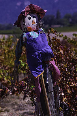 Grape Leaves Photograph - Scarecrow With Floppy Hat by Garry Gay