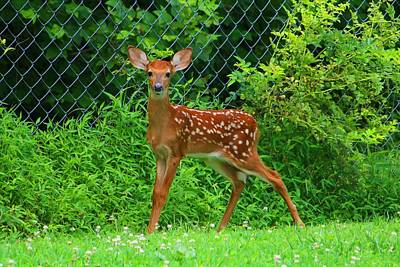 Photograph - Scared Fawn by Kathryn Meyer