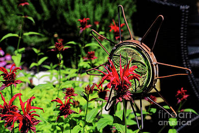 Photograph - Scarlet Beebalm by Paul Mashburn