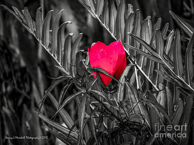 Abstract Airplane Art Rights Managed Images - Scarlet Hibiscus Color Select 1 Royalty-Free Image by Nancy L Marshall