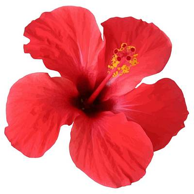 Digital Art - Scarlet Hibiscus Tropical Flower  by Tracey Harrington-Simpson