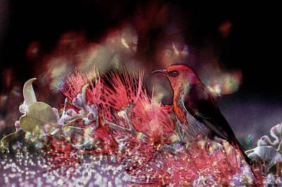Scarlet Honeyeater Art Print by Ericamaxine Price