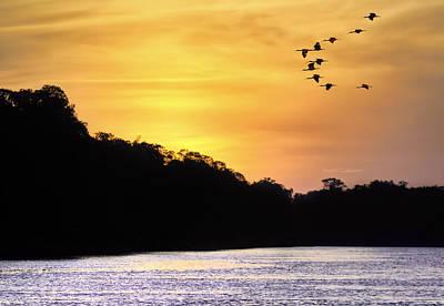 Photograph - Scarlet Ibis Sunset by Nadia Sanowar