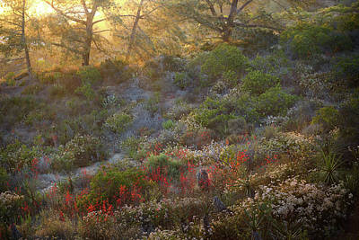 Photograph - Scarlet Larkspur At Sunset by Alexander Kunz