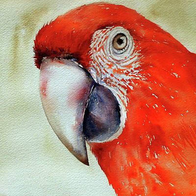 Scarlet Macaw Painting - Scarlet Macaw by Arti Chauhan