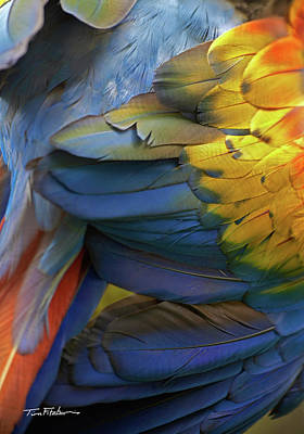 Photograph - Scarlet Macaw Feathers by Tim Fitzharris