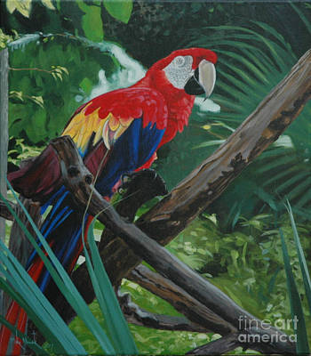 Painting - Scarlet Macaw by Michael Nowak