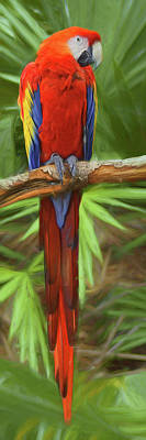 Photograph - Scarlet Macaw by Nikolyn McDonald