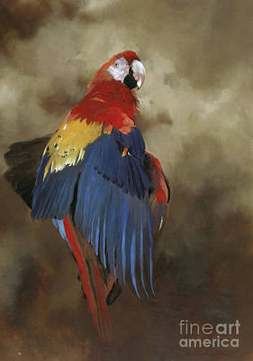 Macaw Wall Art - Painting - Scarlet Macaw One by Odile Kidd