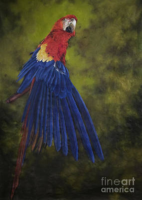 Macaw Wall Art - Painting - Scarlet Macaw Two by Odile Kidd