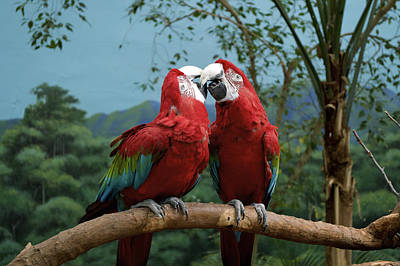 Macaw Mixed Media - Scarlet Macaws Kissing by Thomas Woolworth