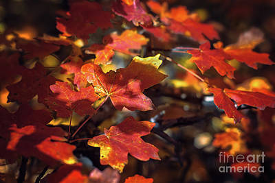 Photograph - Scarlet September by Susan Warren