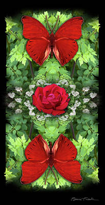 Photograph - Scarlet Rose by Bruce Frank