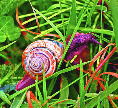 Photograph - Scarlet Snail by Adria Trail