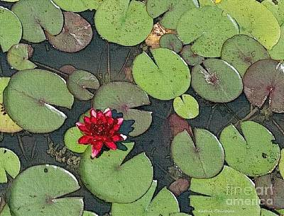Photograph - Scarlet Waterlily by Kathie Chicoine