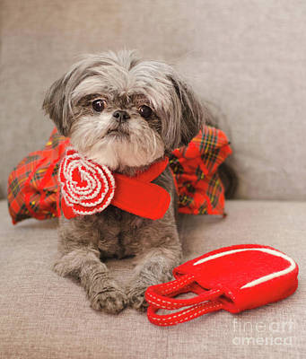 Photograph - Scarlett And Red Purse by Irina ArchAngelSkaya