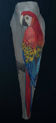 Painting - Scarlett Macaw 2 by Nancy Lauby