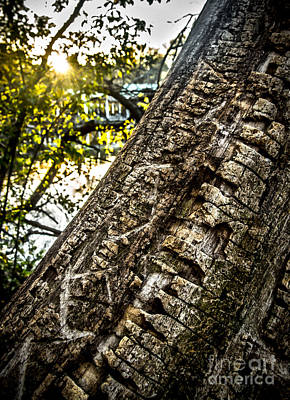 Scarred Tree And Boathouse Art Print by James Aiken