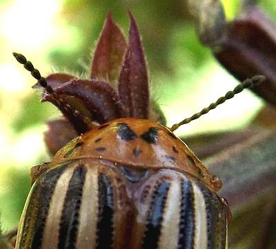 Photograph - Scary Bug Lady by Danielle R T Haney