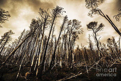 Devastation Photograph - Scary Charcoal Forest  by Jorgo Photography - Wall Art Gallery