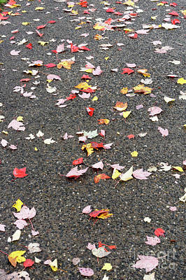 Photograph - Scattered Autumn Leaves  by John  Mitchell