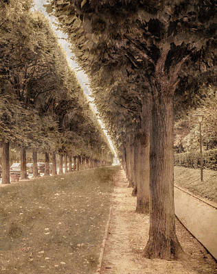 Photograph - Sceaux, France - Allee by Mark Forte