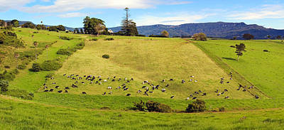 Photograph - Scene And Herd by Nicholas Blackwell