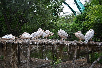 Photograph - Scene From A Zoo-3 by Anand Swaroop Manchiraju