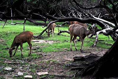 Photograph -  Scene From A Zoo by Anand Swaroop Manchiraju
