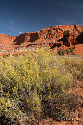 Photograph - Scenery Capital Reef National Park by Cindy Murphy - NightVisions