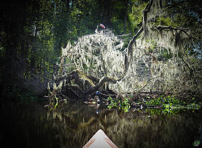 Animals Photos - Scenes From A Kayak, No. 13 by Elie Wolf