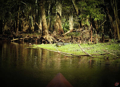 Animals Photos - Scenes From A Kayak, No. 15 by Elie Wolf