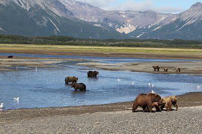 Photograph - Scenic Bears by David Wilkinson
