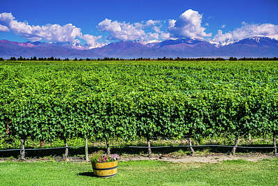 Photograph - Scenic Landscape With Andes Mountains With Snow And Vineyard On  by Patrick Duarte Silveira