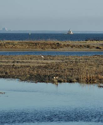 Photograph - Scenic Marshlands Of Ct by Margie Avellino