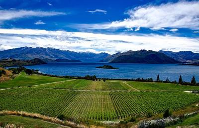 Grape Vine Photograph - Scenic New Zealand by Thibaut Marquis